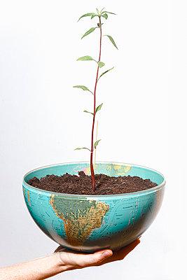 Junge Pflanze in einer Weltkugel - p750m2192501 von Silveri