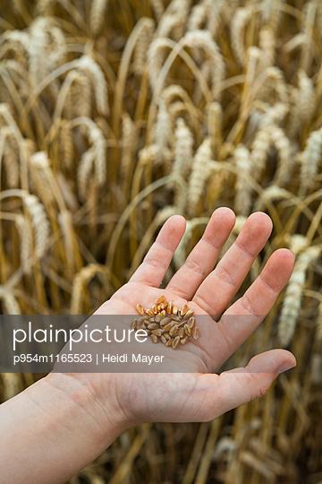 Weizen - p954m1165523 von Heidi Mayer