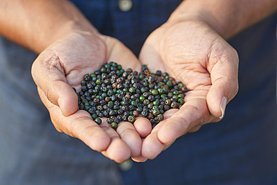 Person with peppercorns - p1629m2211302 by martinameier