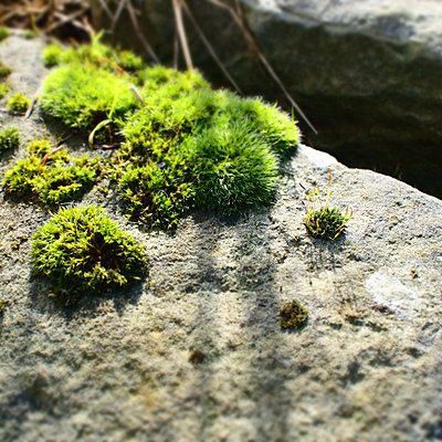 Moss in the sunshine - p927m1355326 by Florence Delahaye