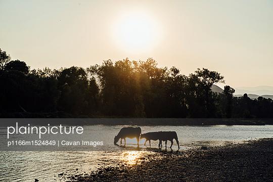p1166m1524849 von Cavan Images