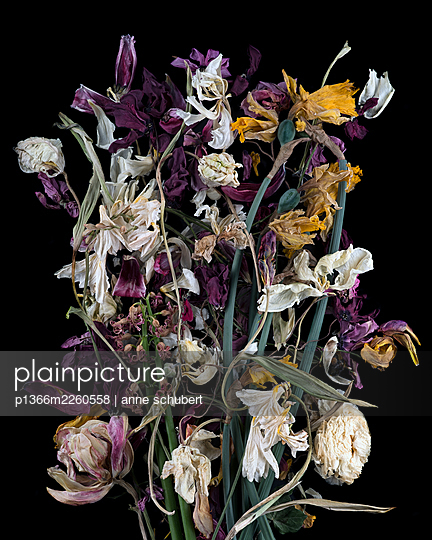 Withered bunch of flowers against black background - p1366m2260558 by anne schubert
