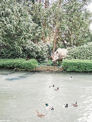 Tierpark - p1425m1487078 von JAKOB SCHNETZ