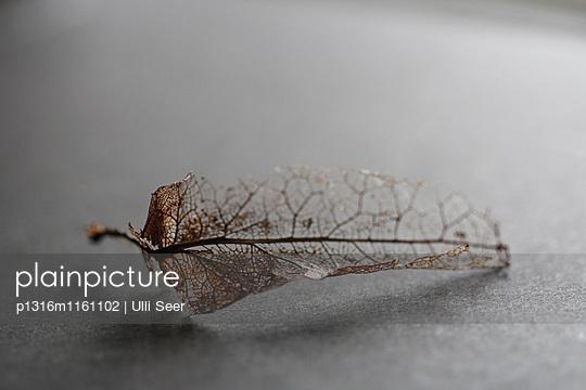 Vertrocknetes Blatt - p1316m1161102 von Ulli Seer