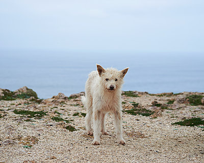 Straßenhund am Meer - p1124m1112591 von Willing-Holtz
