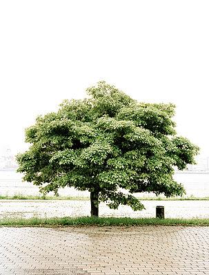 Baum in Japan - p7510007 von Dieter Schwer