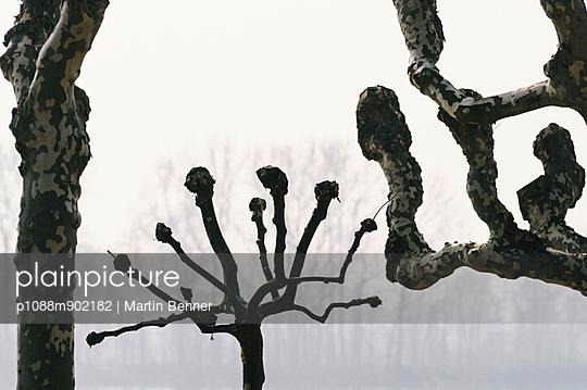 Bare trees - p1088m902182 by Martin Benner