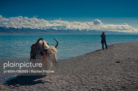 Ein Yak mit Tourist im Hintergrund am Namco See in Tibet, dem zweitgrößten Salzsee Chinas - p1400m1582925 von Bastian Fischer