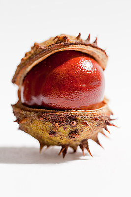 Chestnut in shell - p570m907594 by Elke Röbken