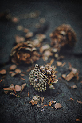 Fir cones - p946m1045106 by Maren Becker
