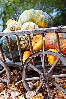 Handcart full of pumpkins - p1183m997203 by Hath/Robbin