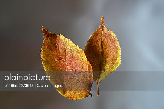 p1166m2073612 von Cavan Images