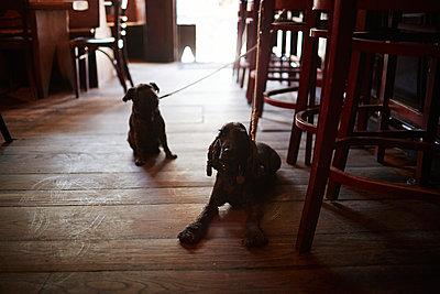 Two dogs - p584m960025 by ballyscanlon