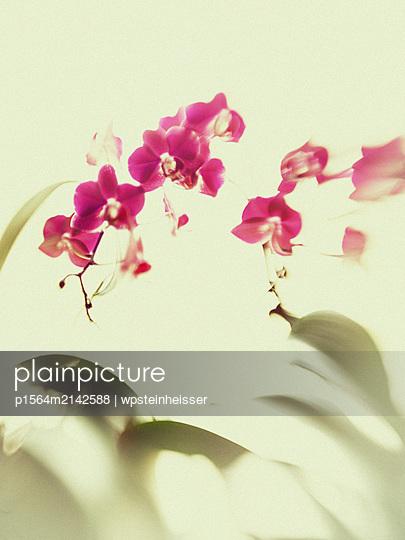 Orchidee - p1564m2142588 von wpsteinheisser