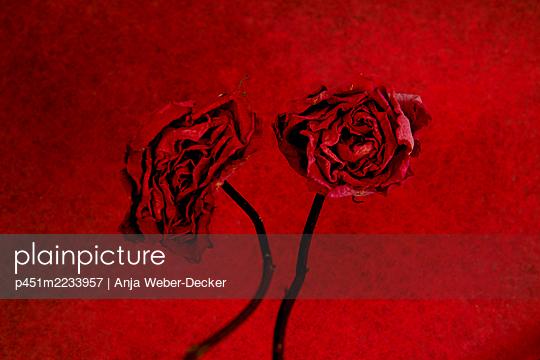 p451m2233957 by Anja Weber-Decker