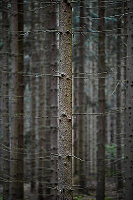 Germany, woods - p2683434 by Rui Camilo