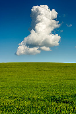 Isolated cloud above a wheat field. Auvergne. France - p813m1461152 by B.Jaubert