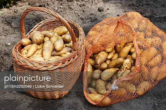 Fresh potatoes - p113m2292046 by Lioba Schneider