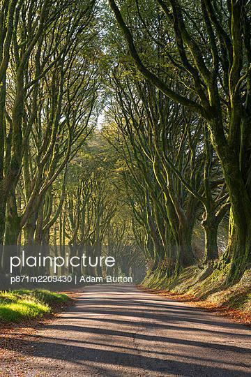 Tree lined lane on the edge of Dartmoor, Bridestowe, Devon, England, United Kingdom, Europe - p871m2209430 by Adam Burton