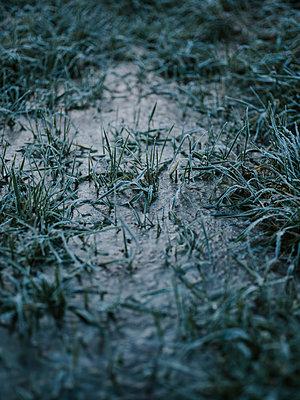 ICE - p1184m1120157 by brabanski