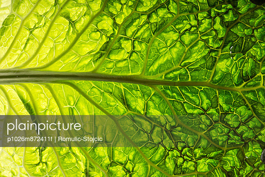 Savoy Cabbage - p1026m872411f by Romulic-Stojcic