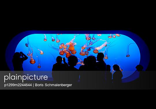Panorama window, jellyfish, Monterey Bay Aquarium, California - p1299m2244644 by Boris Schmalenberger