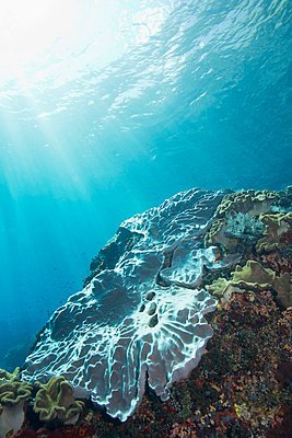 Coral Reef Underwater - p1014m745972 by Jeff Hornbaker