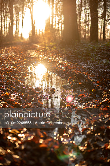 Woods in autumn - p310m2248553 by Astrid Doerenbruch
