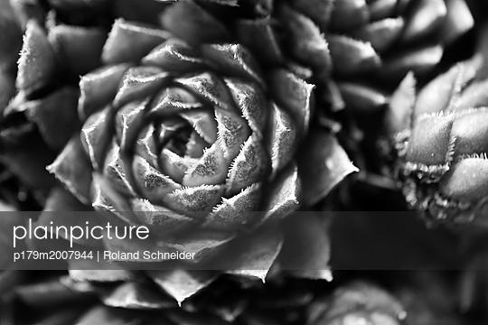 p179m2007944 by Roland Schneider