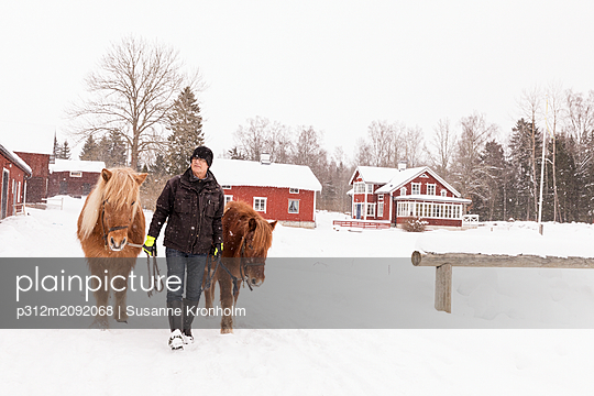 Senior man walking with ponies - p312m2092068 by Susanne Kronholm