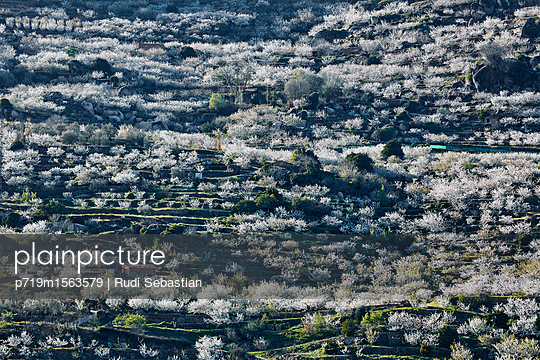 Cherry blossom in Jerte valley - p719m1563579 by Rudi Sebastian