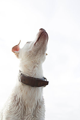 Dog - p1076m855578 by TOBSN