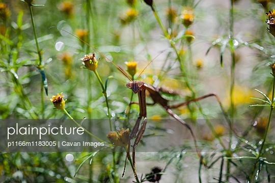 p1166m1183005 von Cavan Images
