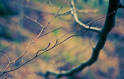 Branch - p1153m951237 by Michel Palourdiau