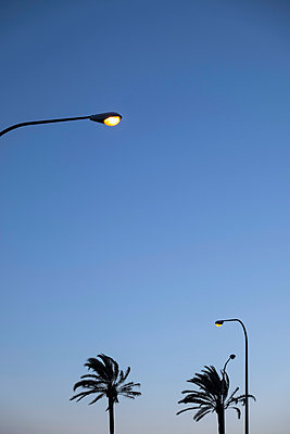 Palm and street lamps - p335m1003223 by Andreas Körner