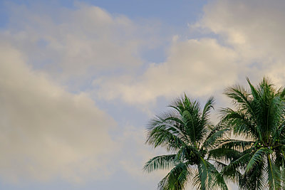 Palm tree against cloud - p1427m2163713 by Tetra Images