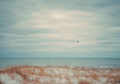 USA, Florida, Navarre, Vogel fliegt über das Meer - p1617m2278922 von Barb McKinney