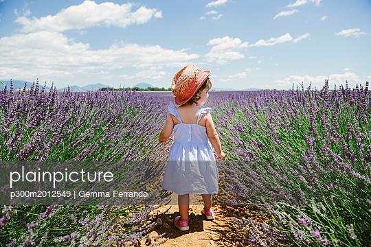 France, Provence, Valensole plateau, rear view of toddler girl in purple lavender fields in the summer - p300m2012549 von Gemma Ferrando
