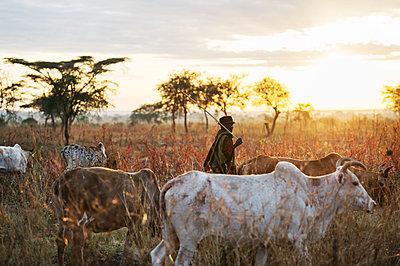 Africa, Uganda, Pastoralist - p1167m2283451 by Maria Schiffer