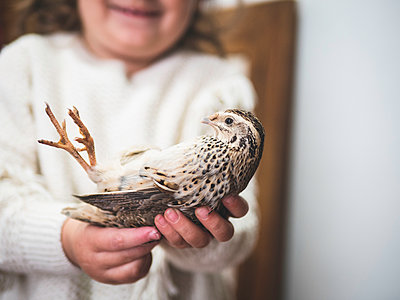 Toddler girl holding quail in her hands - p1522m2064643 by Almag