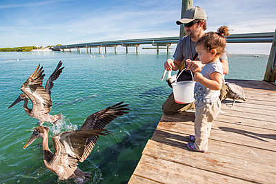 Father and daughter feeding pelicans and tarpons, Florida Keys, USA - p924m1015493f by Romona Robbins Photography