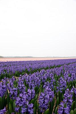 Texel - p707m1093264 by Sorin Morar