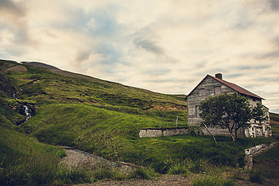 Tree outside anabandonedhouse in Iceland - p1084m986768 by Operation XZ