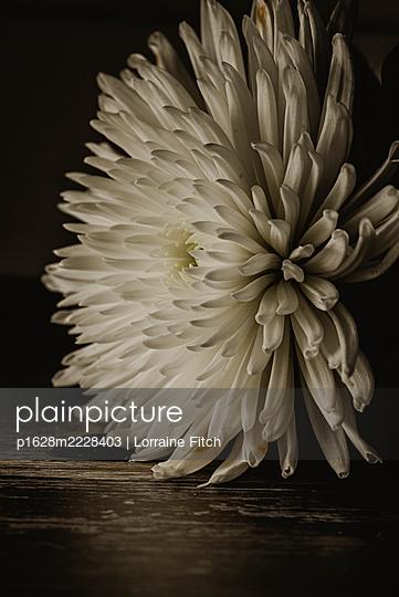 Weiße Blume - p1628m2228403 von Lorraine Fitch