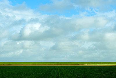 Texel - p1132m1039997 by Mischa Keijser