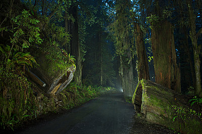Road amidst forest at Jedediah Smith Redwoods State Park during dusk - p1166m1489260 by Cavan Images