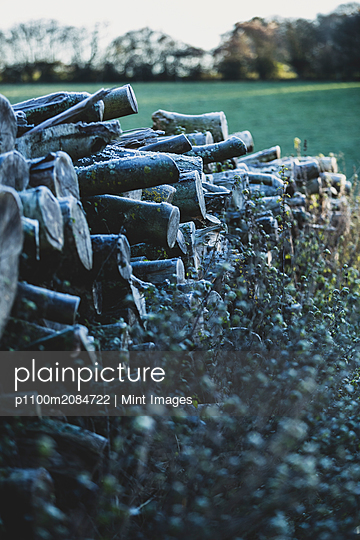 Close up of stack of wooden logs on a farm pasture. - p1100m2084722 by Mint Images