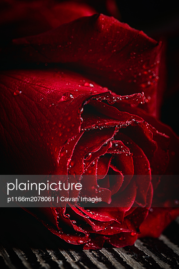 Red roses for Valentine's Day - p1166m2078061 by Cavan Images