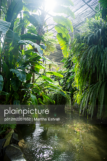 Tropical plants over pond in glasshouse - p312m2207652 by Maritha Estvall