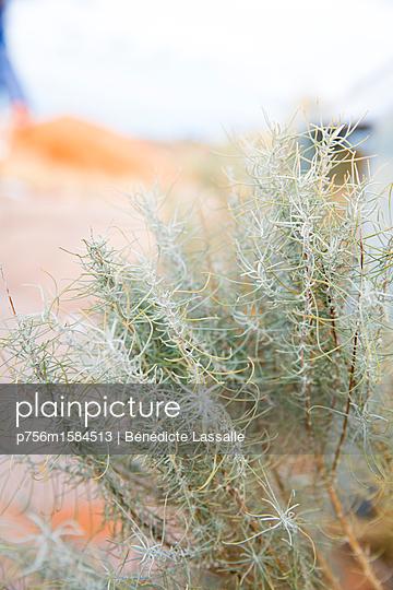 Pflanze - p756m1584513 von Bénédicte Lassalle